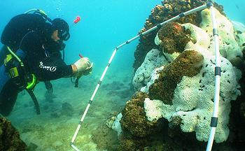 The Kuwait Dive Team discovers widespread coral bleaching in Kuwaiti waters, October 2010.